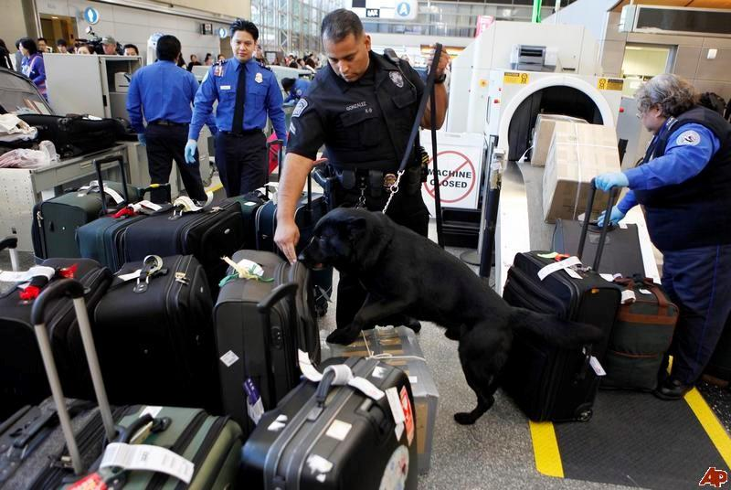 The Atlanta Airport is Now using Dogs to Speed Up Passenger Lines