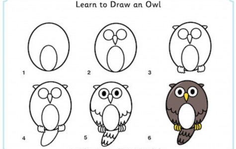 Learn How to Draw an Owl!